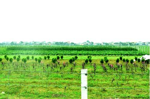 Vườn dược liệu xanh công ty cổ phần dược phẩm PQA